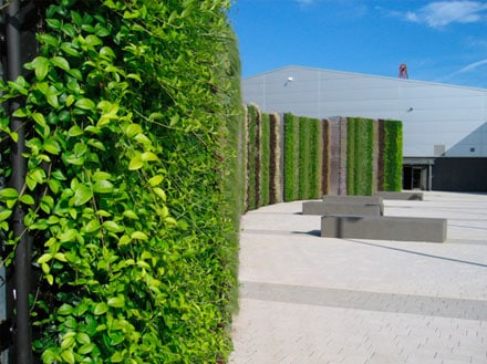 Living Walls Using Drippers